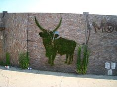 Moss graffiti, also called eco-graffiti or green graffiti, replaces spray paint, paint-markers or other such toxic chemicals and paints with a paintbrush and a mo...