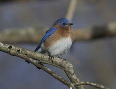 Butler's Birds: But which Winter Bird is Best???