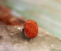 Fossilized Coral one of a kind sterling silver ring - Atlas by Sage