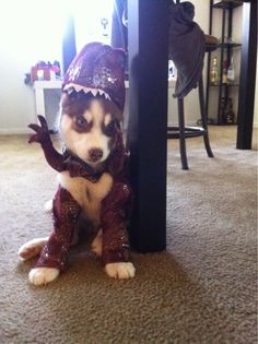 For my cake day here is my husky puppy Randall, dressed as a raptor. - Imgur