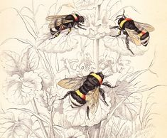 paintings of bumble bees on flowers - Google Search