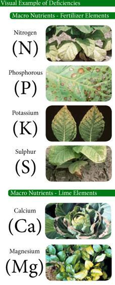 minerals for plants nutrition - Google Search                                                                                                                                                      More