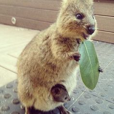 """LEAVES ARE JUST THE GREATEST THING EVER."" 