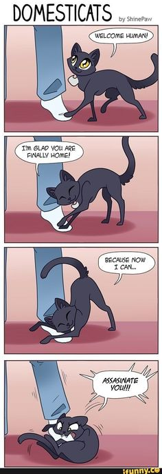 this is literally what my cat does