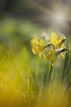 Spring Sunshine by Jacky Parker on 500px