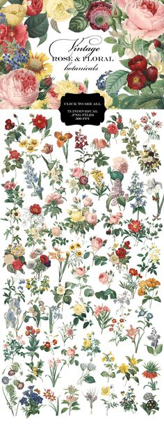 This is a carefully curated collection of 75 vintage rose and floral botanical graphics. Each flower is an individual png file with a transparent background, so they are easily layered.