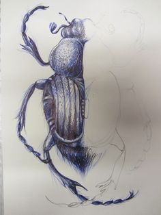 I can't believe this was drawn only using a ballpoint pen! I can see that he/she incorporated both stippling and cross contour lines in their piece. Biro Art, Ballpoint Pen Art, Bio Design, Bugs Drawing, A Level Art Sketchbook, Demon Drawings, Natural Form Art, Observational Drawing, Insect Art
