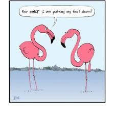 Image result for FUNNY FLAMINGO SAYINGS