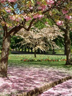 Cannon Hill Park with blossom looks beautiful  #parks #blossom #spring Birmingham uk