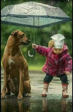 Wounderful Child  with Dog love ......Awesome  this Wold. ......... - Chitra Rani - Google+