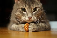 (EXPLORE) I'm interrupting my trip pictures to post some adorable shots of Macey with her new cat toys. A week before heading to Vancouver Island, my stepdaughter and her husband came for a visit to show us their wedding albums and bring gifts for my Premium Dog Coverage! http://www.petinsurance.1800petsandvets.com