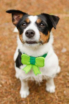Dog Wedding Bow Tie