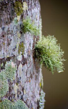lichen | by paletendril