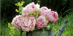 Peonies can grow to be 10 inches depending on the variety.   - CountryLiving.com