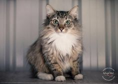 Meet the delightful Mr Scruffy. He was surrendered to Renbury Farm Animal Shelter on Friday with his bestie Gizzy who I'll share next. Both boys are desexed and ready to go to their new homes tomorrow. Please share, lets get these boys out and safe \u003C