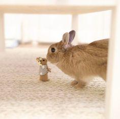 "shino3 on Instagram: ""* 卵小梅ちゃ〜ん♥ * #ネザーランドドワーフ #うさぎ #ふわもこ部 #ペット #アニマル写真部 #bunny #igersjp #iganimal_snaps #cutepetclub #pet #instapet #instaanimal #weeklyfluff…"""