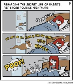 THE HAUNTING …The next few weeks will chronicle an all-too-familiar story regarding pet store rabbits. (To buy, or not to buy … that is the question).  This is PET STORE POLITICS or WASH, RINSE, REPEAT.