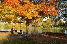 Marvel at the beautiful #FallFoliage at these gorgeous #Toronto destinations. All of them are accesible by #bike!