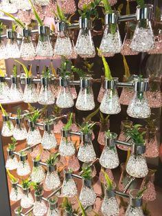 jardin vertical en ampolla