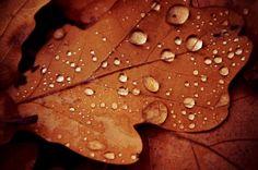 Drops pt. 2 by Catherine Kossinskaya on 500px