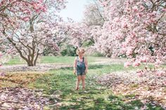 Go to DC to see the cherry blossoms bloom with my children. When I lived there I had a huge one in my back yard and it bloomed on my birthday. It was the best.