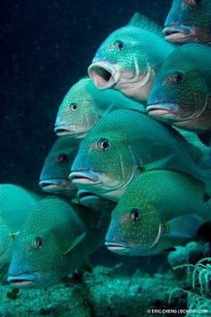 Fish in Teal and Turquoise. Underwater Creatures, Underwater Life, Underwater Animals, Under The Ocean, Sea And Ocean, Beautiful Creatures, Animals Beautiful, Beneath The Sea, Beautiful Fish