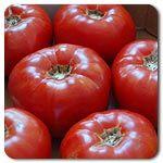 Organic Moskvich Tomato