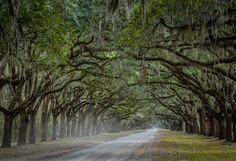 Wormsloe Plantation - Savannah, GA by Matt Boggs