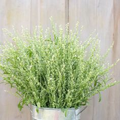 Persian Cress - Organic Cress Seed | Johnny's Selected Seeds Bulb Flowers, Dried Flowers, Top Flowers, Hardening Off Seedlings, Cut Flower Garden, Cut Garden, Flower Gardening, Flower Farmer, Gardens