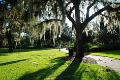 Local Attractions and Hidden Gems in Gainesville, Florida