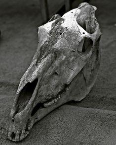 Bored Horse Skull in grey