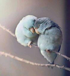 ινδική αγάπη πουλιά ραντεβού site Δωρεάν διαδικτυακές ιστοσελίδες γνωριμιών Νήσος Βανκούβερ
