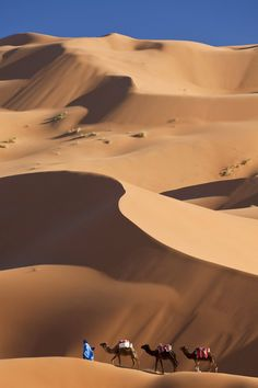 Camels and dunes in Sahara Desert, Morocco   RePinned by : www.powercouplelife.com