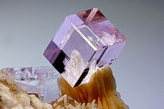 Fluorite, Baryte Gorgeous and perfect Fluorite cristal. Baryte flattened cristals are the base for this perfect cube.Barite has a pale pink colour. Mario Miglioli's Photo