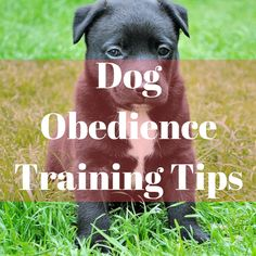 Find out more dog training related tips here like basic commands and hand signals for some of the most common problems dog owners are facing with their dogs.