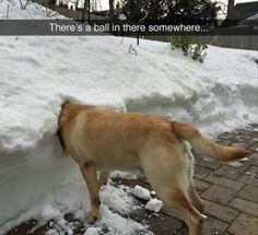 Funny Animal Pictures Of The Day 23 Pics - Funny Dog Quotes - Funny Animal Pictures Of The Day 23 Pics The post Funny Animal Pictures Of The Day 23 Pics appeared first on Gag Dad. Dog Quotes Funny, Funny Animal Memes, Animal Quotes, Cute Funny Animals, Dog Memes, Funny Animal Pictures, Funny Cute, Dog Pictures, Funny Dogs