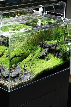 Lovely aquarium