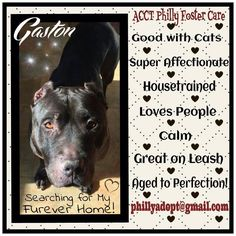 Gaston is in foster care waiting patiently for a forever home!