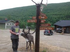 Arrow signs mounted to a lighting pole. Arrow Signs, Heat Treating, Arctic, Pine, Ocean, Horses, Lighting, Animals, Finland