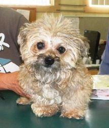 31225 Leia is an adoptable Yorkshire Terrier Yorkie Dog in Wetumpka, AL. Leia came to us as�a stray never reclaimed.� That is really sad as this old little gal deserved better than that.� She is 8-9 y...