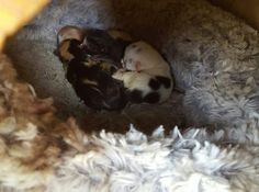 5 kiscicánk született. Kérlek like oljátok köszi.   ♥♥♥