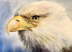 Eagle, watercolor, by Giulia Gatti Watercolor And Ink, Watercolour Painting, Watercolors, Kittens Cutest, Bald Eagle, Bird, Cats, Gallery, Drawings