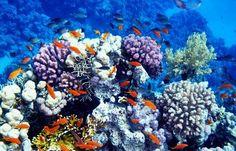 Marine Life like this one surround the Island of Bonaire