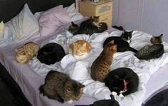 Any room on that bed for me?