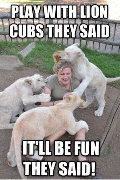 Funny Memes about Cubs