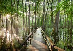 the Cypress swamp, Natchez Trace.... a few years ago we saw a baby aligator here ... very spooky place