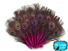 Peacock Feathers 10 Pieces HOT PINK MINI by MoonlightFeatherInc