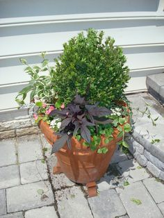 """From Bunnycakes Blog: """"Here is a list of my favorite plants to use in container pots:        Geraniums      Vinca Vine (variegated vine)      Dusty Miller (frosty light green plants)      Alyssum (little white flowers)      Potato Vine (dark purple vine)      Black Pearl Ornamental Pepper      Boxwood (for large containers)    The combination of Geraniums & Vinca vine come from a friend of mine, S.     -K"""""""