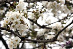 Green Glam # 02 - Mon cerisier en fleurs
