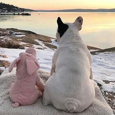 Just watching the sunset with my little piggy!❤ French Bulldog